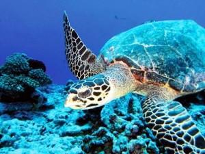 Islas Fiji agencia de viajes