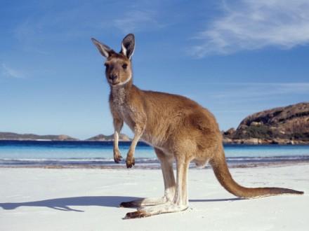 auzeland-Kangaroo-Experience-Plus