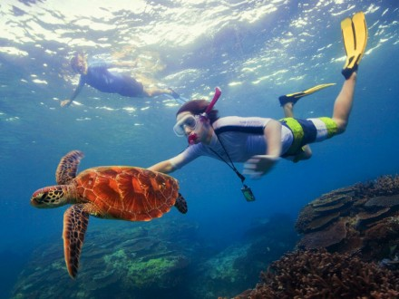 auzeland-downunder-submarinismo-coral-tortuga-diving-snorkeling
