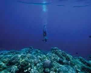 belleza acuatica polinesia