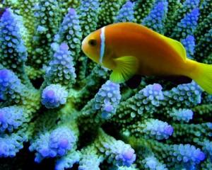 belleza polinesia peces