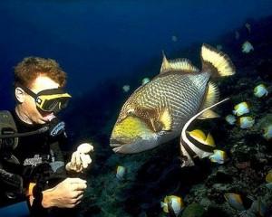 buceo en polinesia