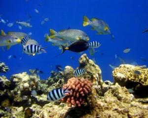 coral ponesia viajes
