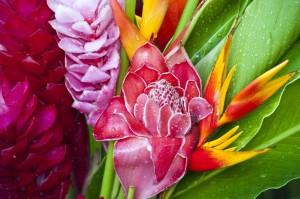 flora en islas cook