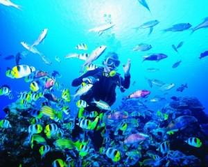 nadar en polinesia viajes