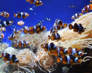 viajar a polinesia acuaticos