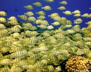 viajar a polinesia snorkel