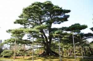 Viajar a Japon Jardín Kenrokuen Kanazawa