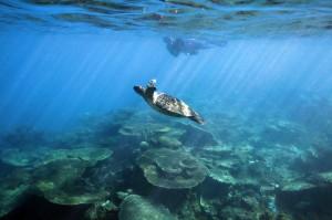 Viajes a la Gran Barerra de Coral Australia