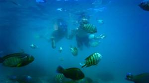 snorkel en Australia