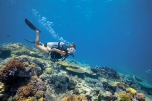 Buceo en Lizard Island, La Gran Barrera de Coral