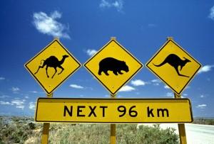 señal animales viajar australia