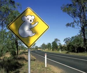 señal koala viajes australia