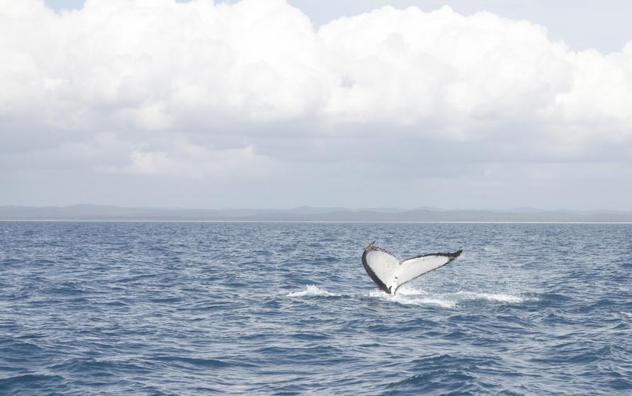 aguas de Warnambool, desde donde pueden realizarse avistamientos de ballenas.