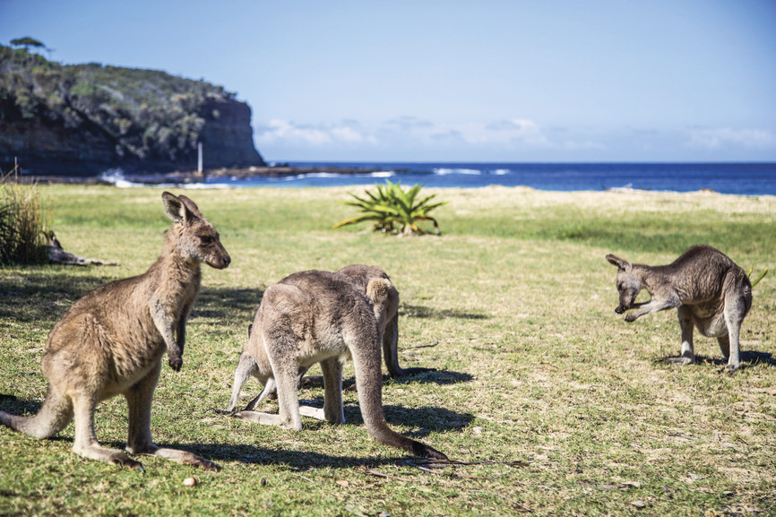 verano australiano