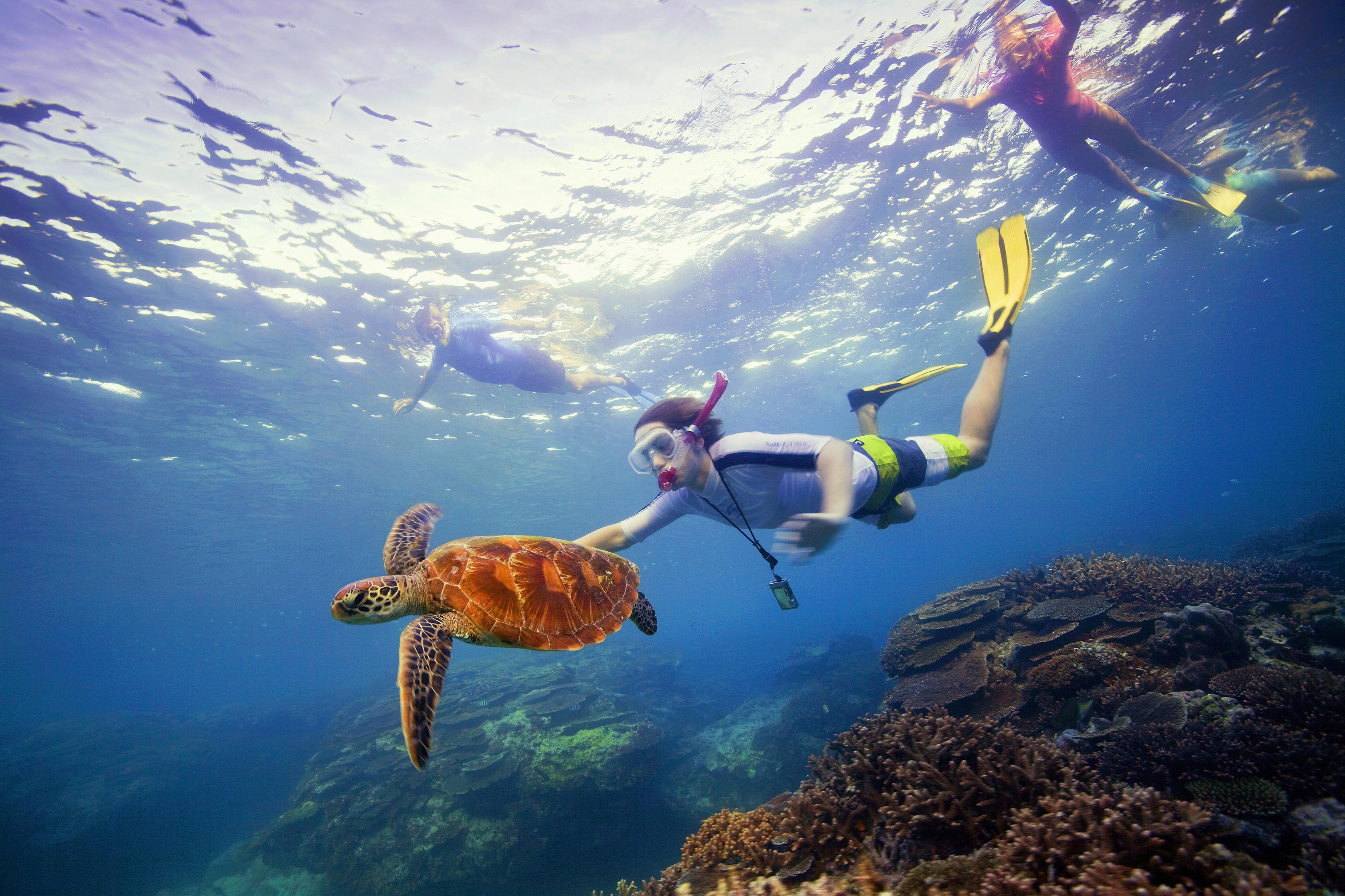 great barrier reef, viajes auzeland