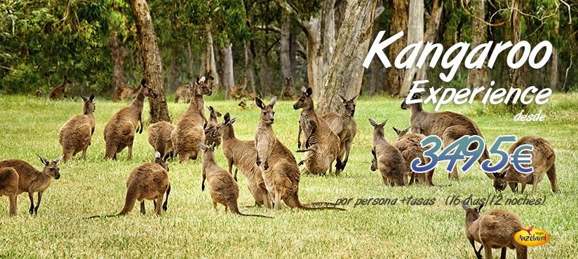 Vive la auténtica Kangoroo Experience en Australia - Auzeland agencia de viajes